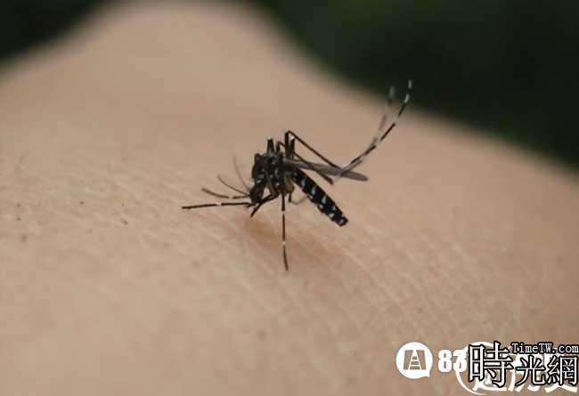 蚊子喜歡叮咬什麼血型的人
