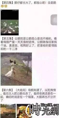網紅鵝已被宰殺