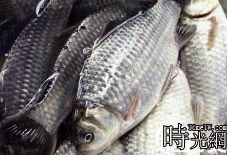 四川自貢現天價魚